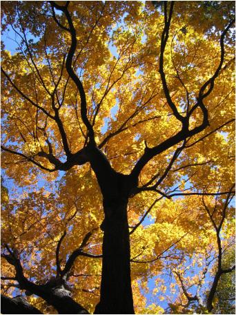 GS-Newsletter-Autumn-photo
